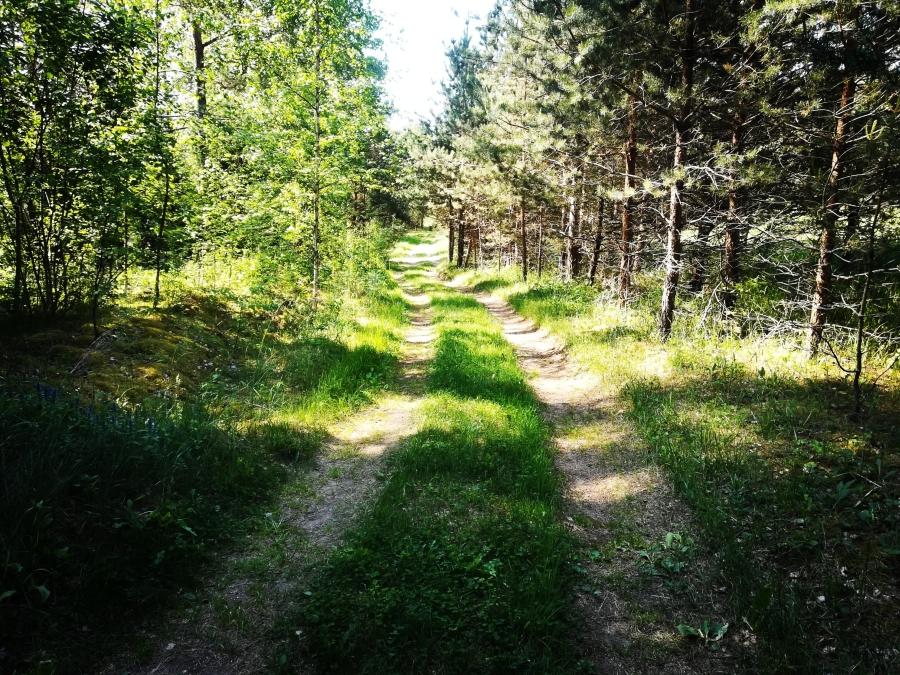 Miško keliukas link ežero