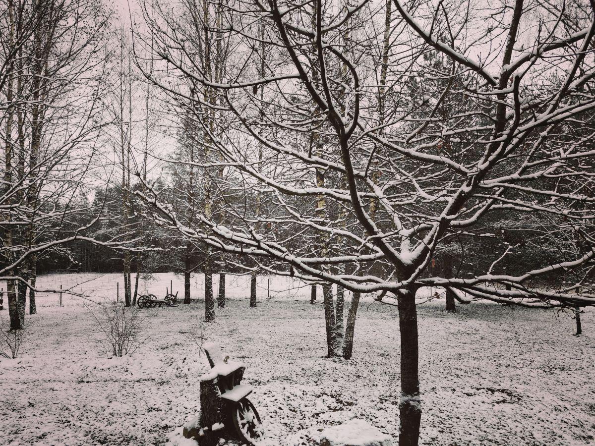 Sodyba Pirtelė dviems žiemą